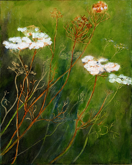 9- Queen Anne's Lace